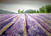 Elvira Ingram - Lavender Fields Tasmania