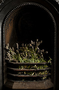 Grate Photos - Lavender Fire by Anne Gilbert