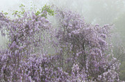 Lavender Fog Print by Leslie Kirk