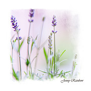 Nature Center Posters - Lavender Fragrance Of France. Elegant Knickknacks Poster by Jenny Rainbow