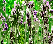 Cards Mixed Media Prints - Lavender In Summer Print by Patrick J Murphy