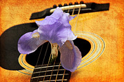 Sound Mixed Media Prints - Lavender Iris And Acoustic Guitar - Texture - Music - Musical Instrument Print by Andee Photography