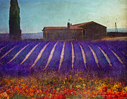 R christopher Vest - Lavender Meadows...