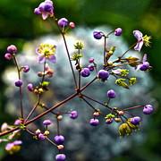 Byron Varvarigos - Lavender Mist Explosion