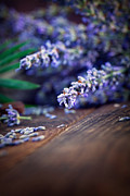 Mythja Posters - Lavender Poster by Mythja  Photography