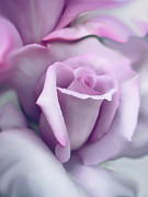 Purple Flower Photo Acrylic Prints - Lavender Rose Flower Portrait Acrylic Print by Jennie Marie Schell