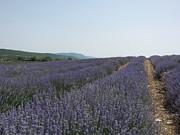 Lavender Sky Print by Pema Hou