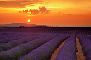 Cultivation Posters - Lavender Sunset Poster by Brian Jannsen