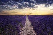 Claudia Moeckel - Lavender sunset