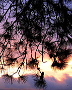 Lavender Sunset Painting Print by Will Borden