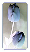 Lavender Tulips Print by Danielle  Parent