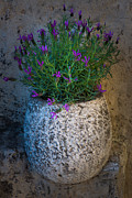 Saint Paul De Vence Framed Prints - Lavender Vase Framed Print by Inge Johnsson