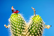 Cactaceae Art - Lawn mowing on cactus II by Paul Ge