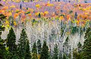 Mary Amerman - Layers of Autumn