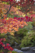 Autumn Metal Prints - Layers of Autumn Red Metal Print by Mike Reid