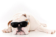 Sleeping Dog Prints - Lazy But Cool Dog Print by Jt PhotoDesign