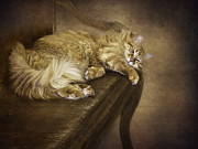 Relaxed Framed Prints - Lazy Cat On A Bench Framed Print by Diane Schuster