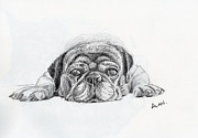 Lazy Dog Drawings - Lazy Dog by Alan Smith