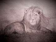 Lounging Drawings Posters - Lazy Lion Poster by Kylani Arrington