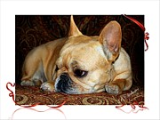 French Bulldog Prints Prints - Lazy Paisley Afternoon Print by Barbara Chichester