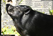 Le Cochon Hereux - A Very Happy Pig Print by AdSpice Studios