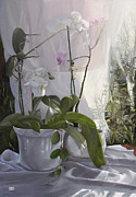 Interior Still Life Paintings - Le Orchidee Sfumate by Danka Weitzen