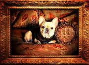 French Bulldog Posters Framed Prints - Le Petite Aristocrat Mystique DOr Framed Print by Barbara Chichester