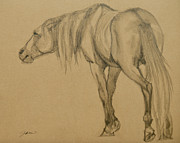 Horse Images Drawings Posters - Lead Stallion Poster by Jani Freimann