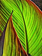 Leaf Abstract Framed Prints - Leaf Abstract 4 Framed Print by Sarah Loft