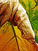 Leaf Abstract 7 Print by Sarah Loft