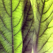 Abstract Art - Leaf Abstract by Christy Beckwith
