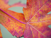 Colors Of Autumn Posters - Leaf Abstract in Pink Poster by Irina Wardas