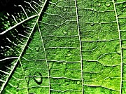 Marianna Mills Metal Prints - Leaf Abstract - Macro Photography Metal Print by Marianna Mills