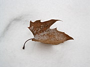 Felix Zapata - Leaf After The Snowstorm