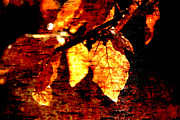Backlit Prints Prints - Leaf and Light Abstract Print by Natalie Kinnear