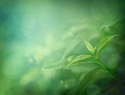 Mythja  Photography - Leaf background