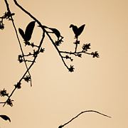 Silhouette Art Prints - Leaf Birds Print by Darryl Dalton