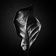 Fall Landscape Print Framed Prints - LEAF - Black and White Closeup Nature Photograph Framed Print by Artecco Fine Art Photography - Photograph by Nadja Drieling