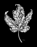 David Drawings - Leaf by David Fedan
