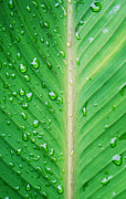 Flora Metal Prints - Leaf green Metal Print by Kristin Kreet