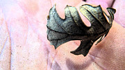 Carl Warren Metal Prints - Leaf in Hand  Metal Print by Carl Warren