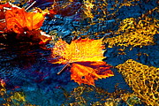 Jay Nodianos Metal Prints - Leaf in the Stream Metal Print by Jay Nodianos