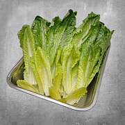Nutrition Mixed Media - Leaf Lettuce by Andee Photography
