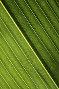 Green Foliage Prints - Leaf Lines I Print by Natalie Kinnear