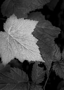 Photo Photo Originals - Leaf me Alone by Jon Glaser