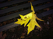 Ron Roberts Photography Photographs Posters - Leaf on a Bench Poster by Ron Roberts