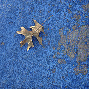 Decor Nature Photo Prints - Leaf on Blue square Print by Ann Powell
