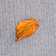 Fallen Leaf Photos - Leaf On Granite 1 - Square by Alexander Senin