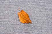 Fallen Leaf Photos - Leaf On Granite 1 by Alexander Senin