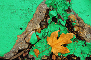 Leaf On Green Cement Print by Amy Cicconi